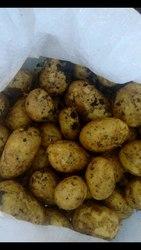 Реализуем оптом: картофель,  лук,  капуста,  свекла
